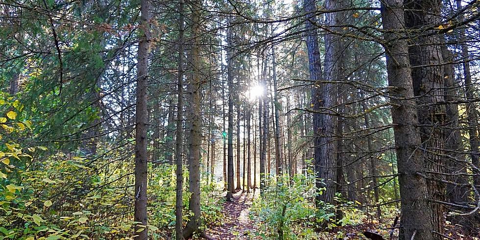 Forest Bathing Walk - April 13th
