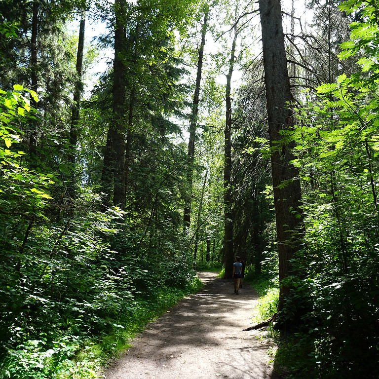Forest Therapy Walk - August 7th