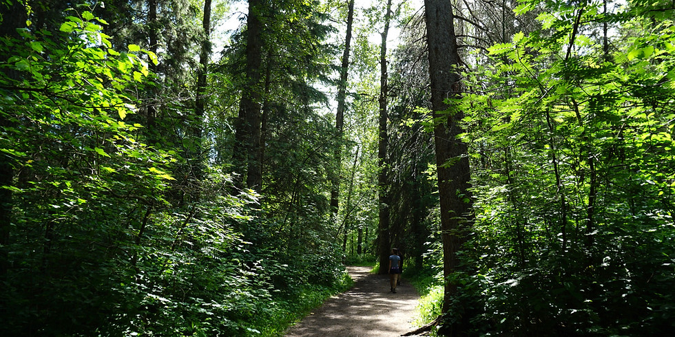 Forest Therapy Walk Gift Certificate