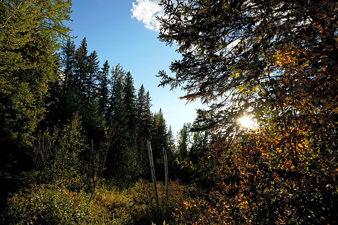 Forest bathing in Edmonton nature