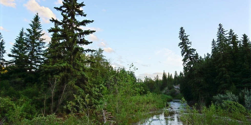 Forest Therapy Walk - July 17th