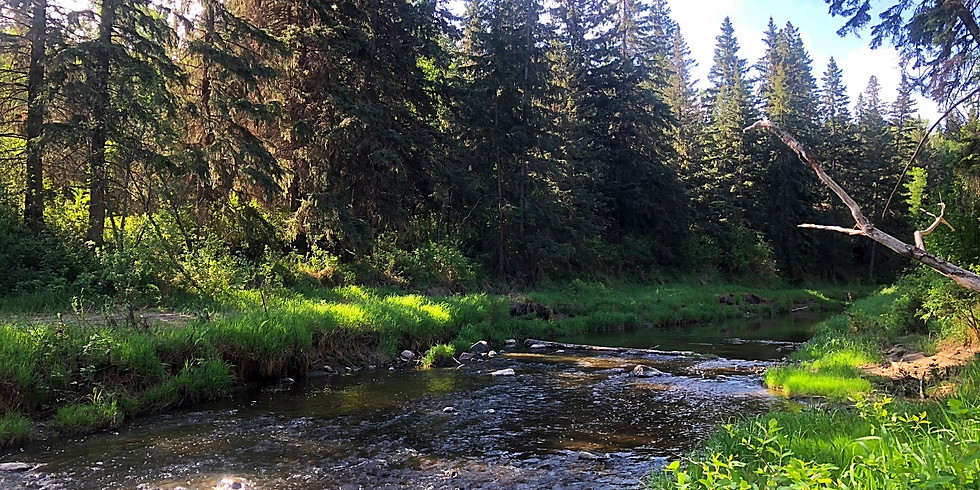 Forest Therapy Walk - May 4th