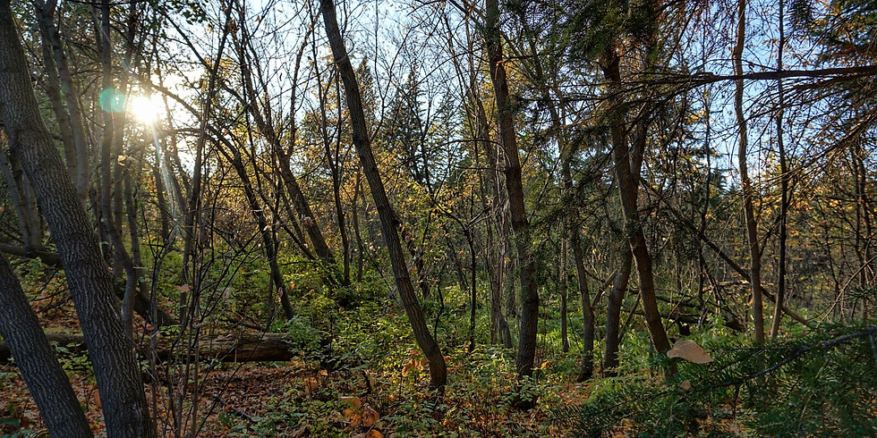 Forest Therapy Walk - October 11th