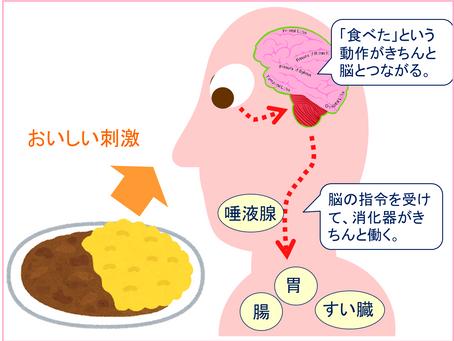 消化と吸収を助ける「ヨガ的な食事」㉖【by 平田ホリスティック教育財団 理事 丸元康生】