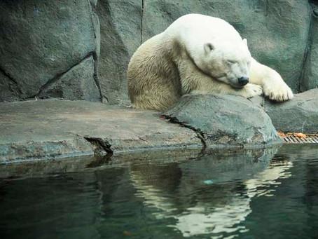 Conversation With A Polar Bear