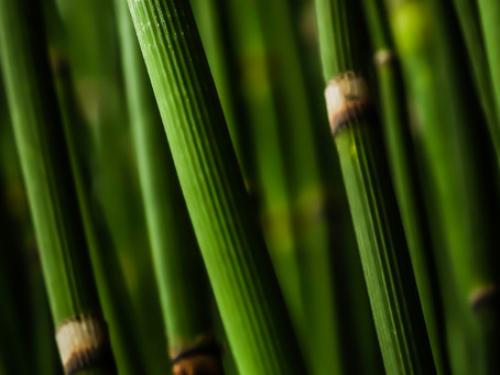 Empaths and Horsetail: Knowing and Using Antidotes