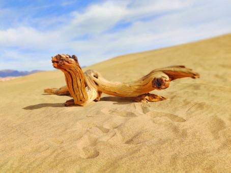 Beach, Boy, Stick, Man: A Parable
