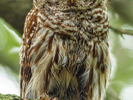 Owls and Jays: A Meditation on Meditation
