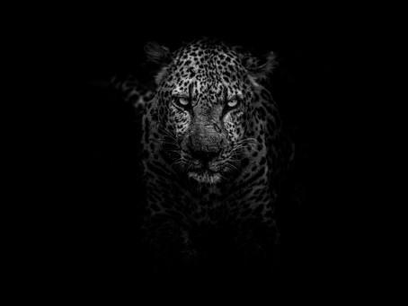 Jaguar Shaman: A Vision
