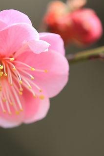 roze bloem.jpg