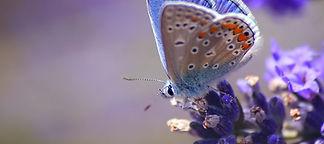 hd-achtergrond-met-een-mooie-vlinder-op-
