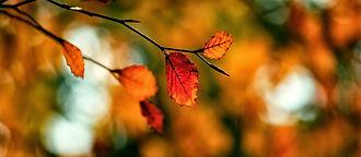 herfst_2.jpg