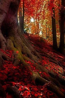 herfstboomwortels.jpg