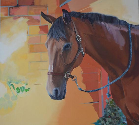 Buddy horse.jpg