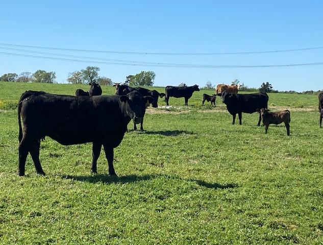Oak Ridge Farms