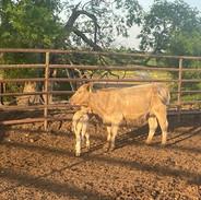 T Bar C Ranch