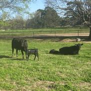 Sorrells Farm