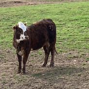 Double J Cattle Ranch