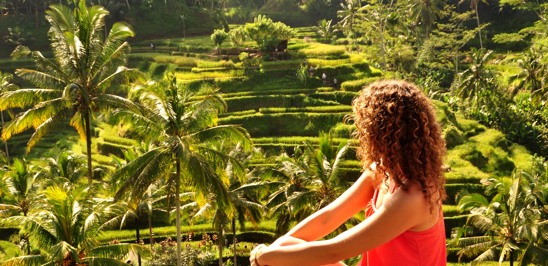 Rizières de Tegalagang (Ubud) - Bali.JPG