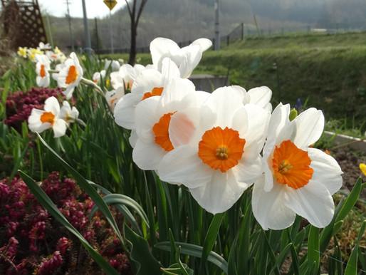 コロナに負けじオンライン花壇 花からの励まし