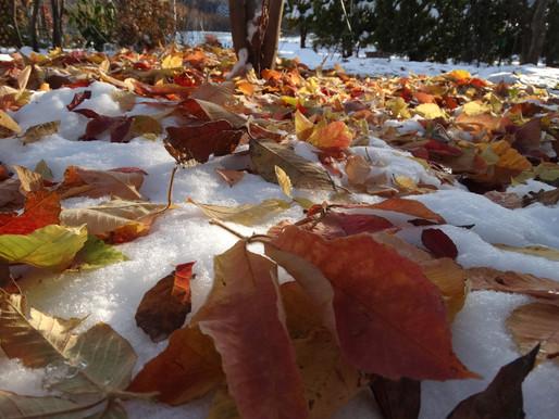 雪の上に秋