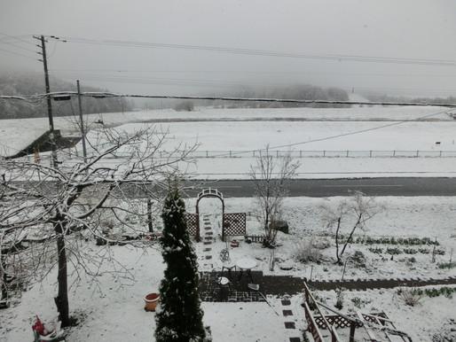 朝は雪☃、外は真っ白 恒例の町内の春のごみ拾いが中止に