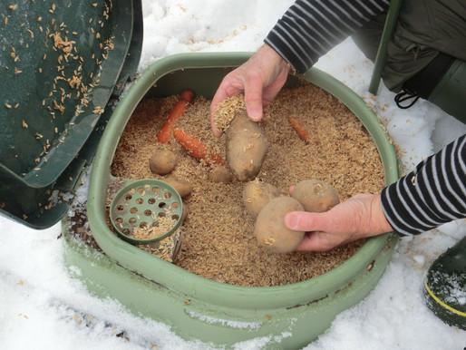 コラム「ゆったり菜時記」東川町移住者の野菜作り記 第一回 越冬ジャガイモ