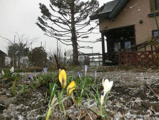 なごり雪 東川町郊外雪が舞う朝でした
