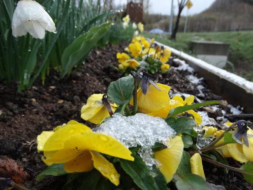 5月のなのに雪が降る⛇ 3月末並みの寒さ 東川町郊外