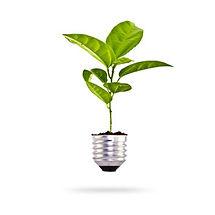 ecologia2.jpg