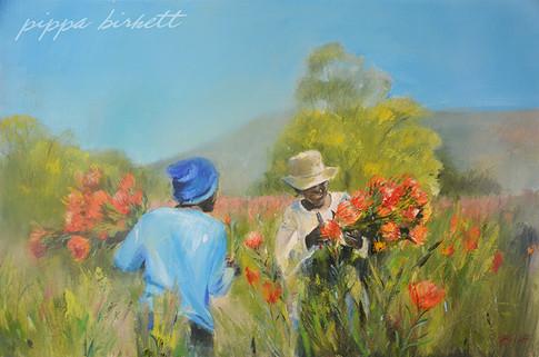 Protea Pickers