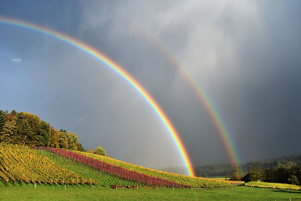 Canva - Double Rainbow over the Field.jp