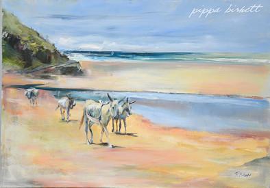 Donkies on Transkei Beach