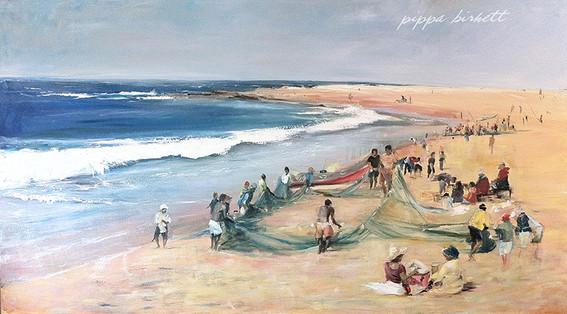 Sardine Run South Coast