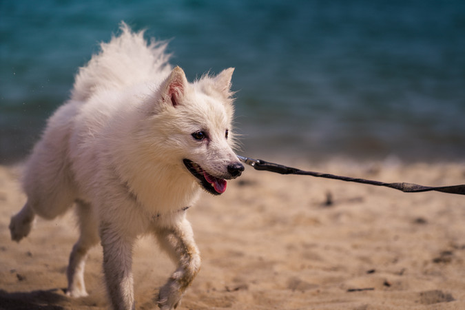 Dog Export 3 (1 of 1).jpg