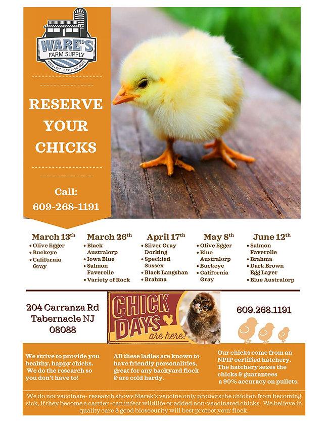 chick flyer pdf.jpg