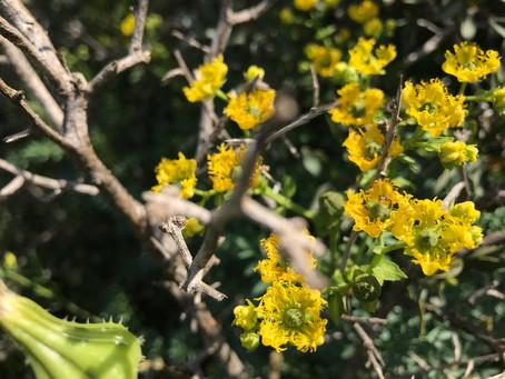 הדרכה מקצועית לבוגרי נטורופתיה ורפואת צמחים ולמטפלים צעירים