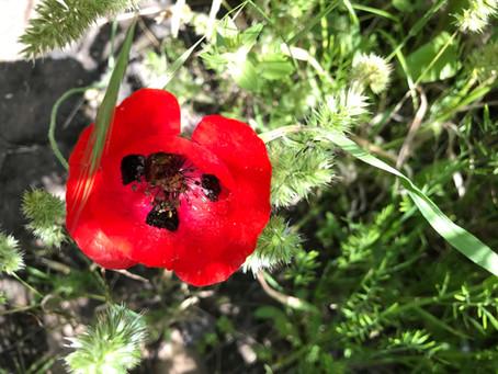רפואת צמחים מודרנית ומסורתית
