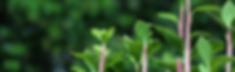 日本ゲシュタルト療法学会認定   2019年 ベーシックコース & アドバンスコース