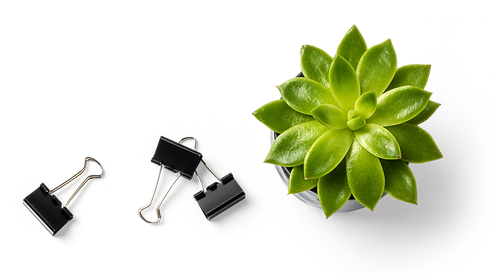 Succulent%20Plant%20and%20Binder%20Clips_edited.png