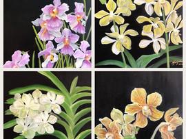Orchids ... Status Update