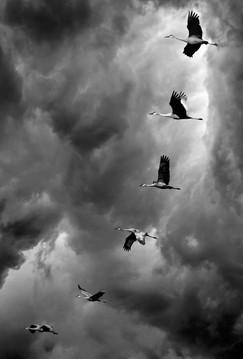 animal-photography-avian-birds-2405382.j
