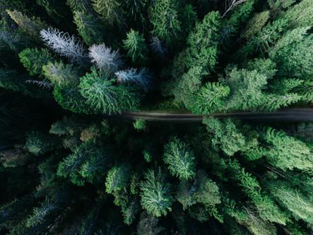 aerial-beautiful-color-2553004.jpg