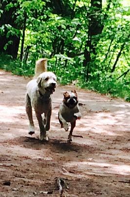 west toronto dog walking