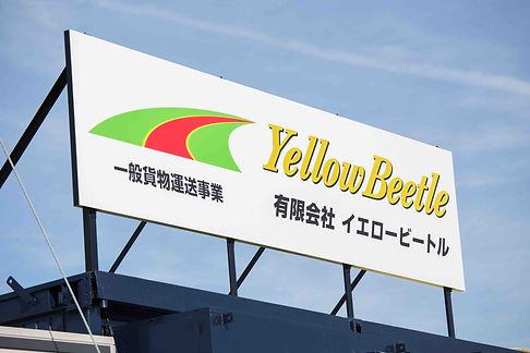 yellow-beetle9.jpg