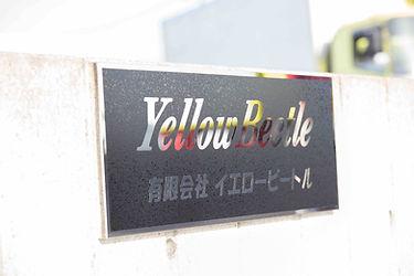 yellow-beetle8.jpg