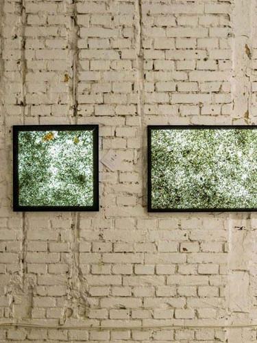 viaplant-quadrum_zidni paneli.jpg