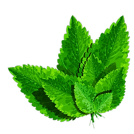 Herbs III.png