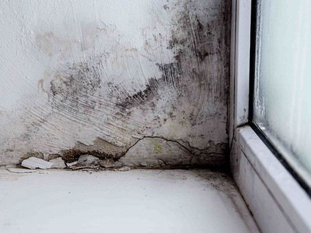 Why You Need To Control Excessive Moisture In Your Home
