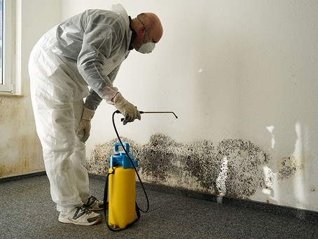 What Is Mold Remediation?